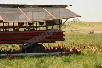 pasture+fed+eggs, burroughs+family+farm, burroughs+eggs, free+range+eggs, free+range+chickens, healthy+farming+organic+farming, healthy+soil