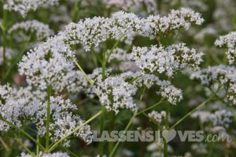 gaia+herb, know+your+herbs, gaia+farm, herbal+supplements, meet+your+herbs