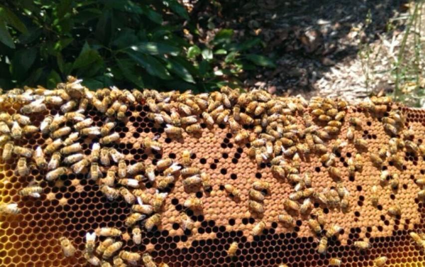 Lassens, Lassen's, Lassens Natural Foods and Vitamins, Local Honey, Local producers, Bloom honey, Bloom