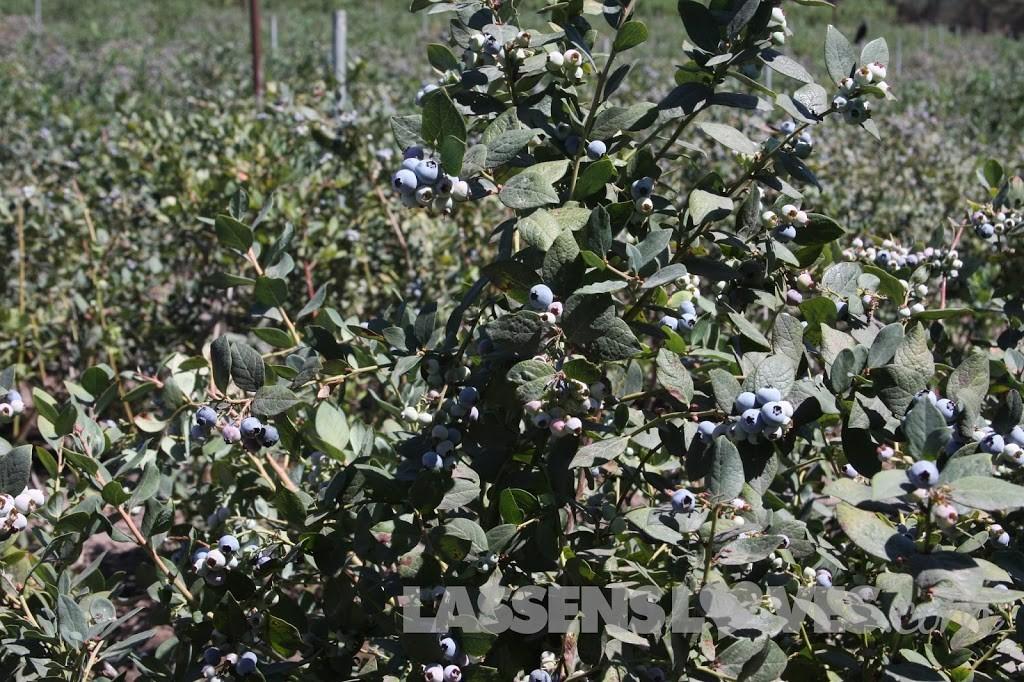 Forbidden+Farms+Blueberries, Sandra+Newman, Organic+farming, organic+blueberries